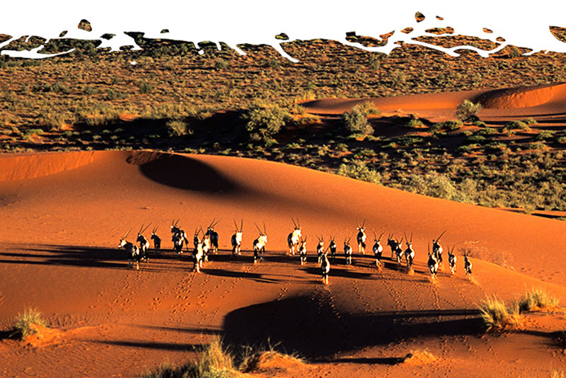 Kalahari-Désert